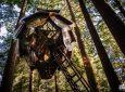 Pinecone Treehouse: новый фантастический домик на дереве