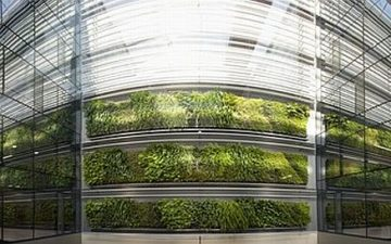 Массивная зеленая стена в Новой Зеландии