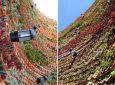 Потрясающий вертикальный сад построен во внутреннем дворике отеля Ushuaia Ibiza