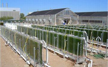 Система BIOS-FIN: новый фасад здания, производящий солнечную энергию и фильтрующий воду