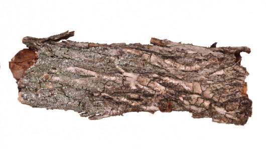 Немецкие ученые разработали изоляционную пену из коры дерева