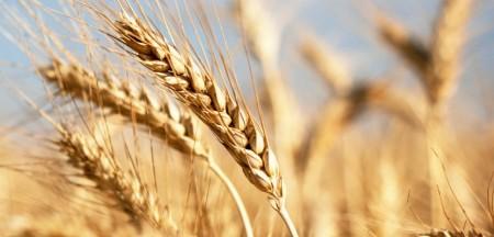 Древесноволокнистые плиты из прессованной пшеничной соломы от  Stramit USA