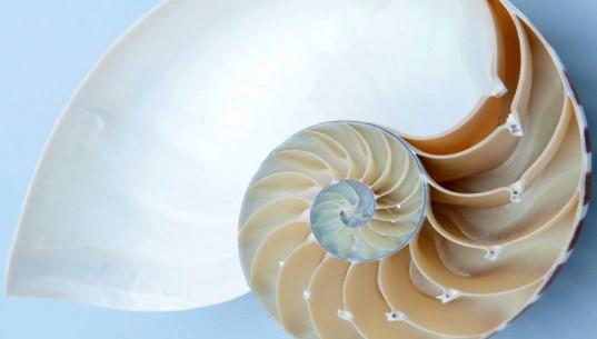 В Лондоне открылась выставка архитектурных композиций, вдохновленных природой