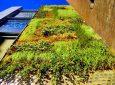 На фасаде театра эль-Раваль установлен вертикальный сад с системой водосбора