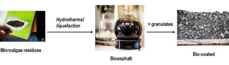 Микроводоросли могут быть использованы для изготовления «зеленого» асфальта