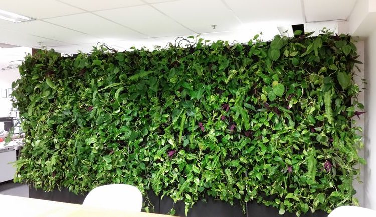 PodPlants: новый модульный вертикальный сад для закрытых помещений