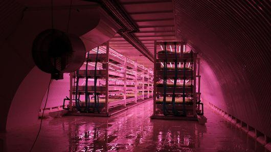 В заброшенном лондонском туннеле открылась первая подземная городская ферма