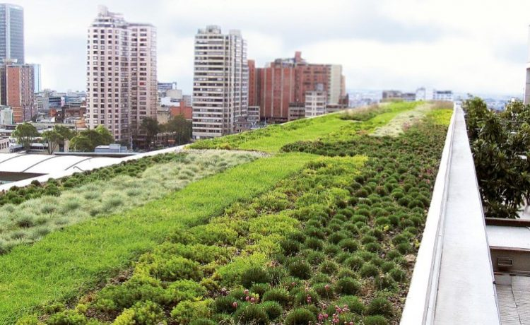 Зеленые крыши способствуют улучшению качества воздуха внутри зданий