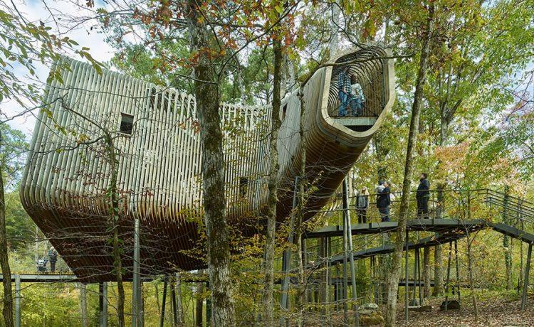 Дом на дереве в форме бумеранга: интерактивное образование для детей и взрослых