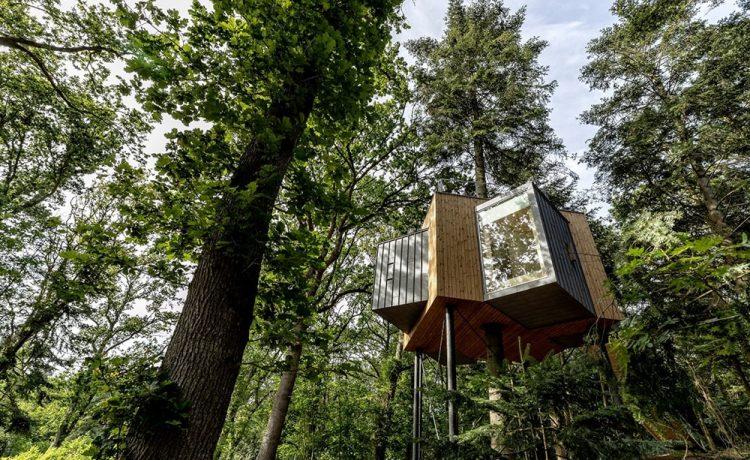 В датском лесу появился роскошный мини-отель на верхушке дерева