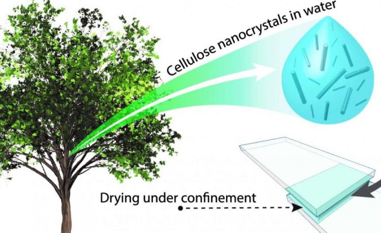 Ученые представили инновационный растительный суперклей
