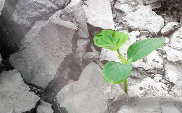 Древесные отходы делают переработанный бетон прочнее