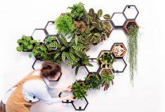 Дизайн-студия Horticus создала модульную «живую стену»
