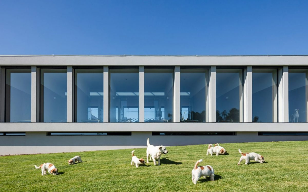 В Португалии построен отель для кошек и собак