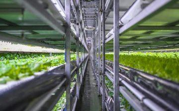Вертикальная ферма по выращиванию овощей собрала первые урожаи