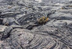 В новом цементе известняк заменен вулканической породой для уменьшения углеродного следа